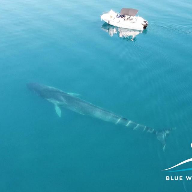 Veliki kit