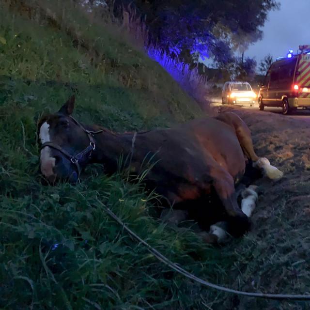 Ozlijeđeni konj