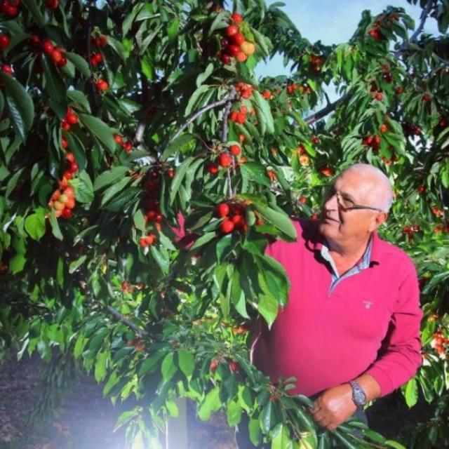 Mate Rađa u svom voćnjaku u Ogorju