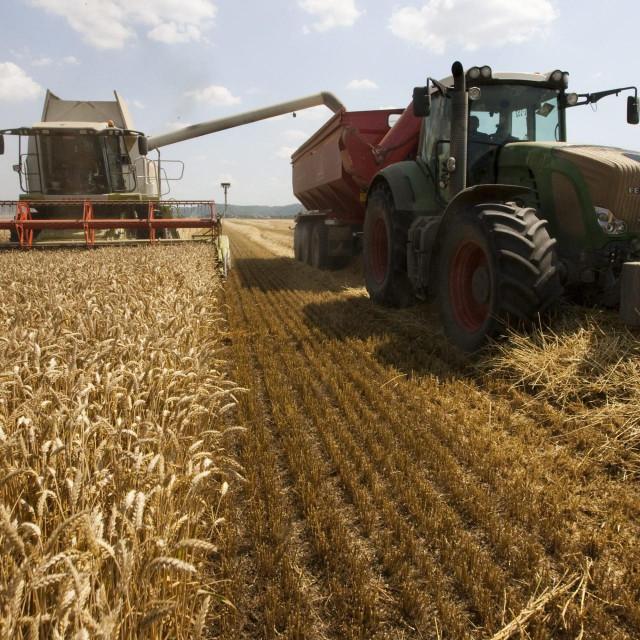 Žetva pšenice<br />