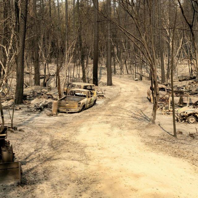 Izgorena šuma Berry Creek u Kaliforniji