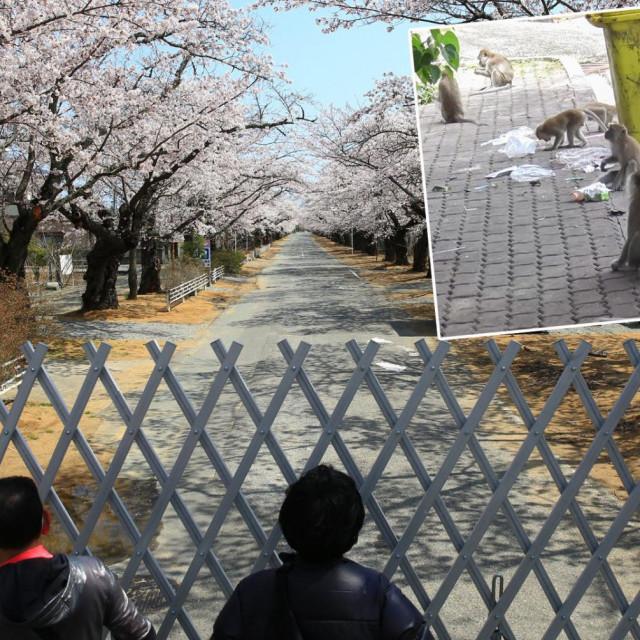 Prizor iz Fukushime/Ilustracija