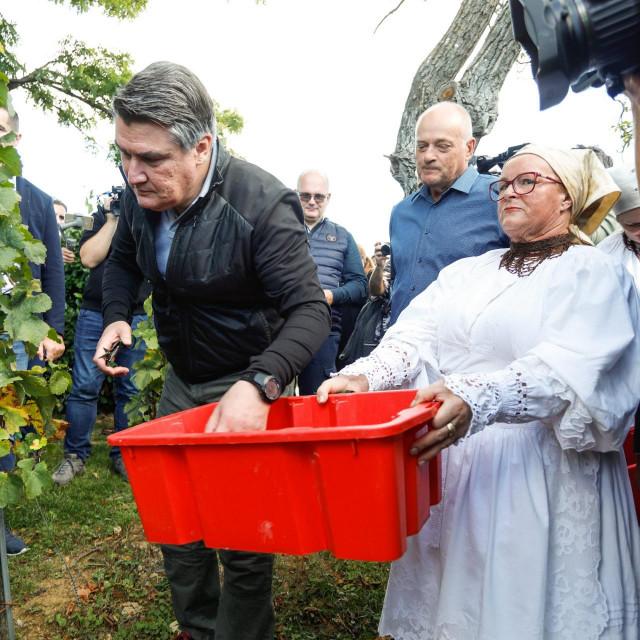 Zoran Milanović u berbi