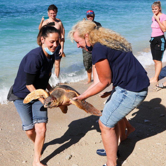 Puštanje u more četiri oporavljene kornjače