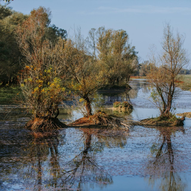 Površinom od 50.650 hektara, ovaj park prirode je najveće zaštićeno močvarno područje ne samo u Hrvatskoj, već i u cijelom dunavskom porječju.