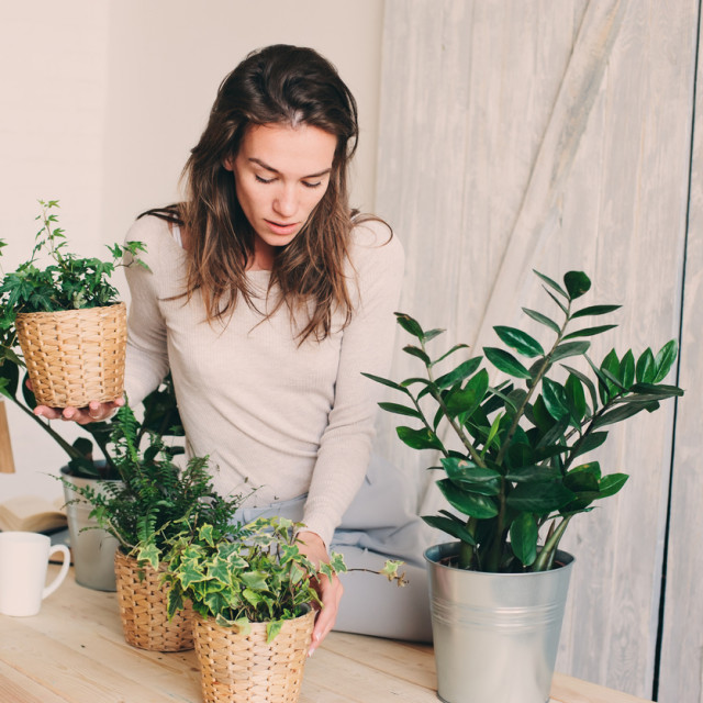 Moć biljaka