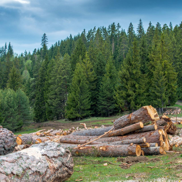 Rumunjska prašuma
