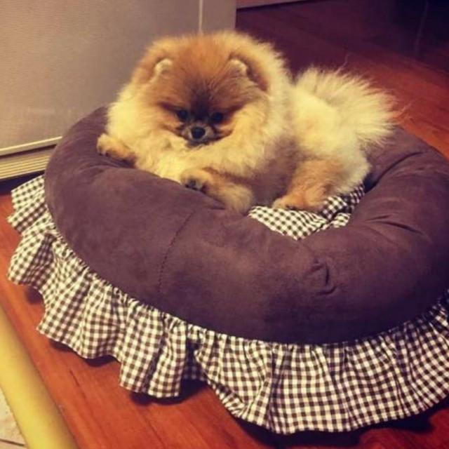 Pepi, Gibonnijev pas