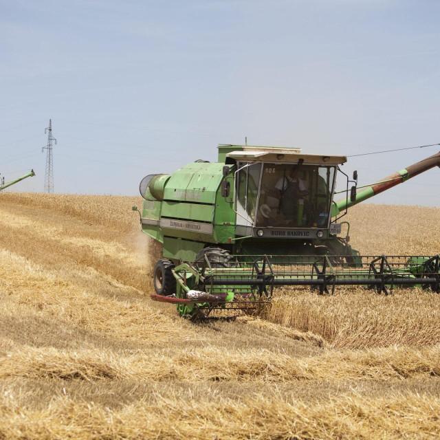 Žetva pšenice u Slavoniji / Ilustracija