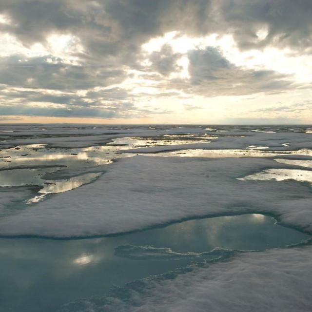 Arktik; ilustracija