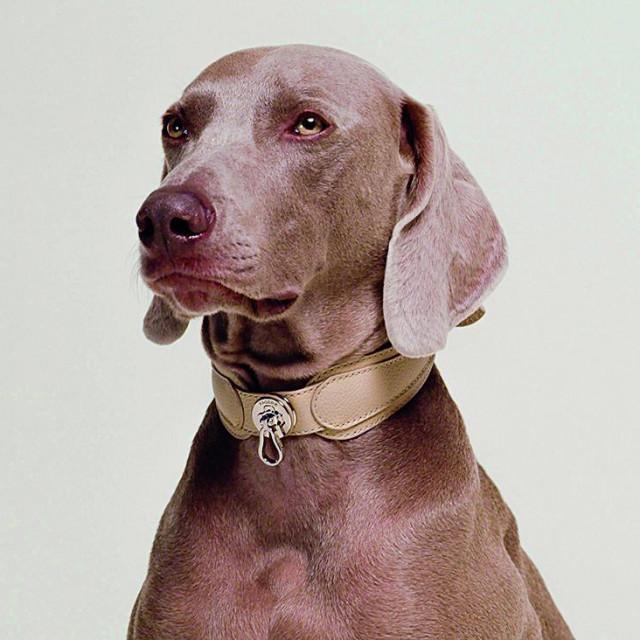 pagerie dodaci za psa