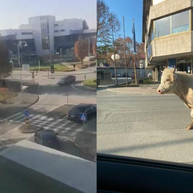 Bik trči Slatinom