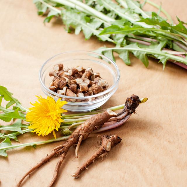 Smatraju ga korovom, ali maslačak je iznimno vrijedna ljekovita biljka koja ima mjesto i u kuhinji