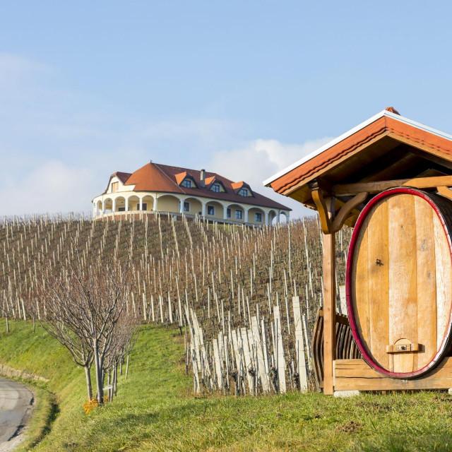 Vinogradi vinarije Šoškić