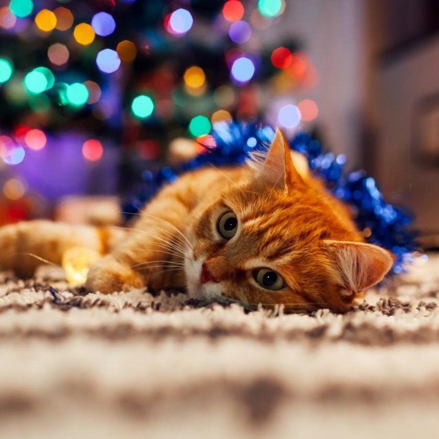 Ginger cat playing with garland and tinsel under Christmas tree at home. Christmas and New year concept