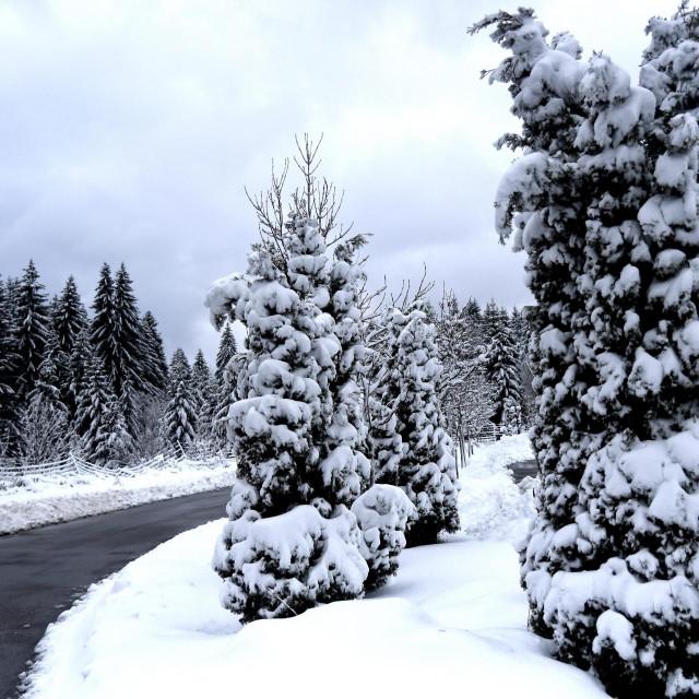 Snijeg u Gorskom kotaru, ilustracija