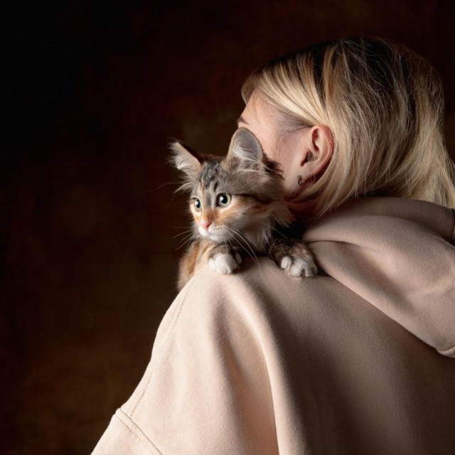 A small purebred kitten sitting on the shoulder of a young woman isolated on colored background. Concept of home comfort, mood, pets love, animal grace. Looks happy, delighted, scared. Copyspace.,Image: 580410185, License: Royalty-free, Restrictions:, Model Release: yes, Credit line: Volodymyr Melnyk/Alamy/Alamy/Profimedia
