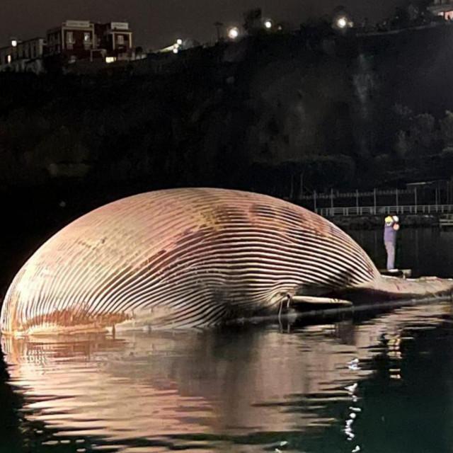 Tijelo golemog kita u Italiji