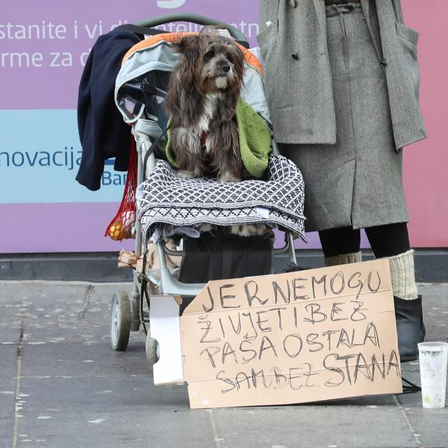 Pas Floki i njegova vlasnica ostali su bez stana u nedavnom potresu