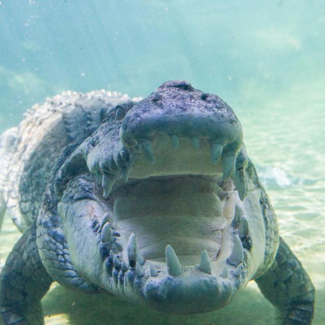 Ilustracija, krokodil
