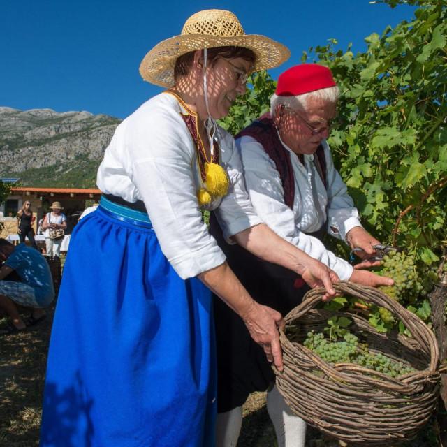 Agroturizam Konavle pozvao je 2019. godine sve zainteresirane na trganje ili berbu grozdja u vinogradu OPG-a Ive Karamana u Pridvorju. Berba grozdja uprilicena je na tradicijski nacin s ciljem ukazivanja na Konavle kao na vinsku regiju te kao destinaciju za ruralni turizam