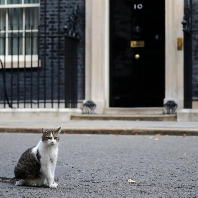 Mačak Larry na dužnosti, ispred svoje rezidencije