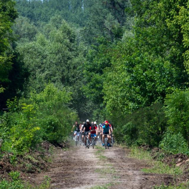 Vožnja podunavskim šumama