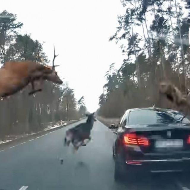 Jeleni i BMW