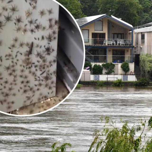 Poplave u Australiji izazvale najezdu pauka