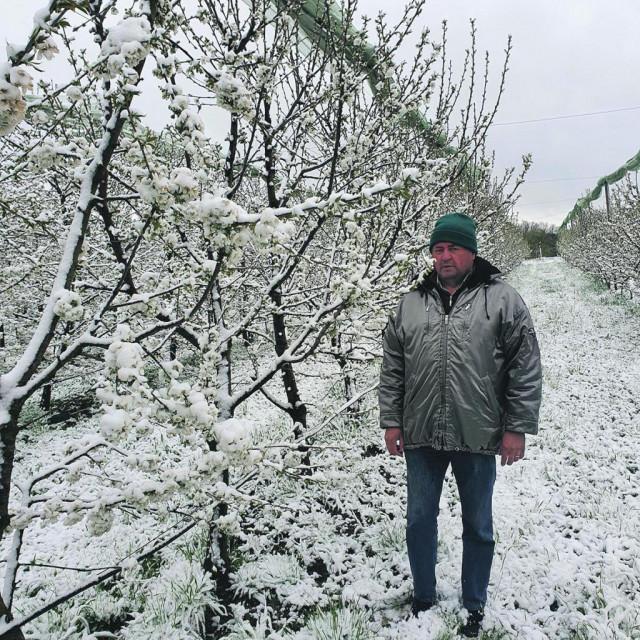 Mraz u voćnjaku