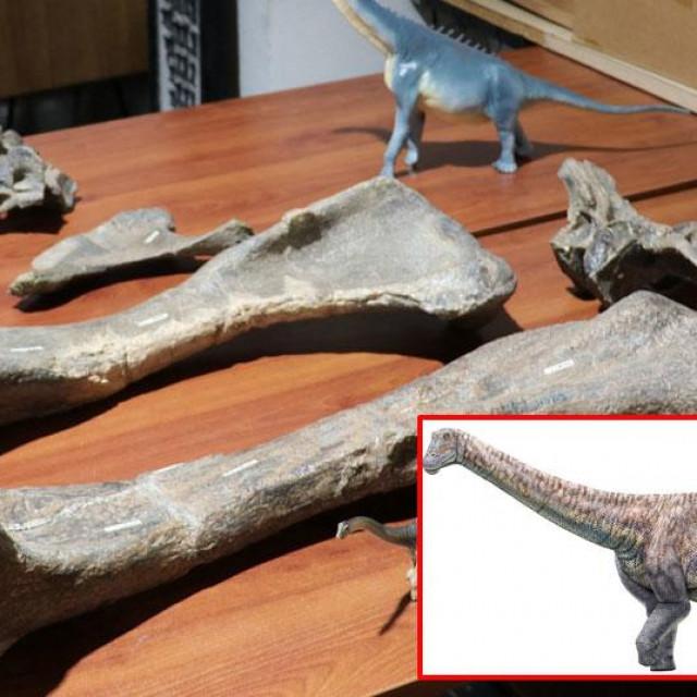 Otkrivena nova vrsta dinosaura