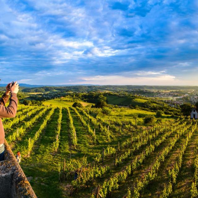 Vinogradi u Bjelovarsko bilogorskoj županiji