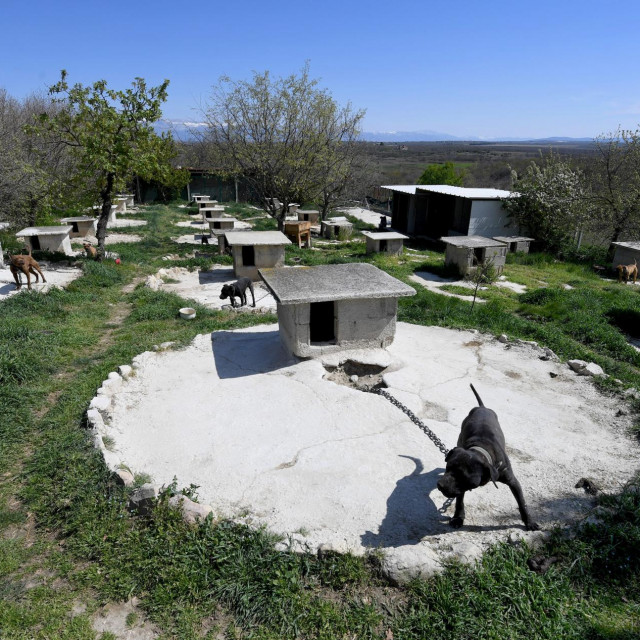 Psi u uzgajalištu u Smokovicu