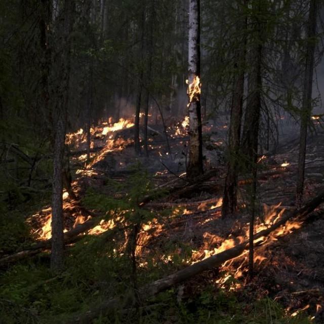 požar u Sibiru