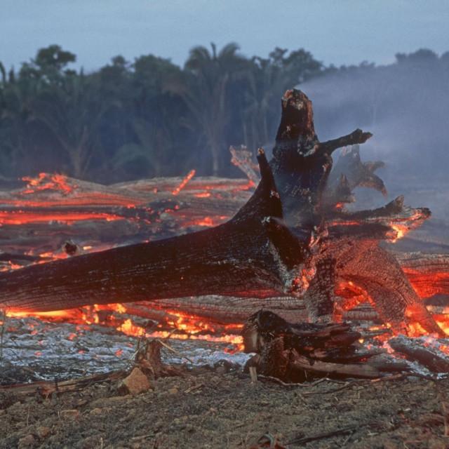Prizor iz Amazonske prašume