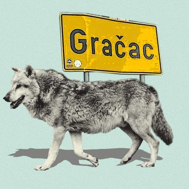 Vukovi u Gračacu