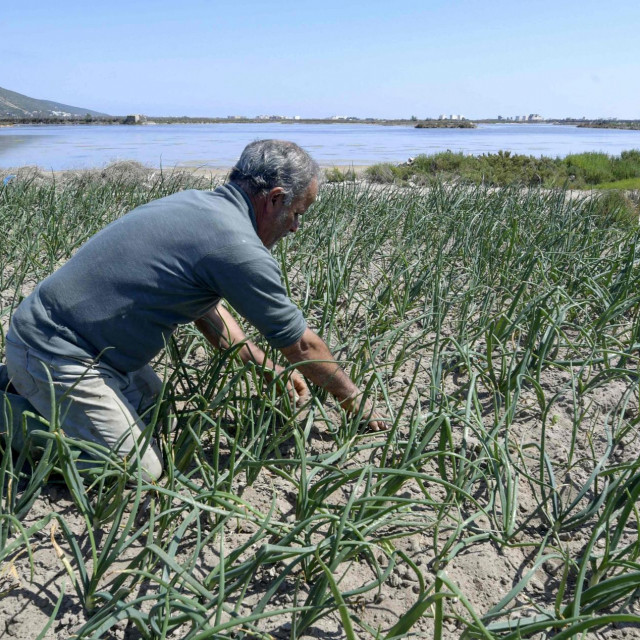 A farmer works on his plot of land near the sea in the small fishing town of Ghar El Melh in Tunisia's north. (Photo by FETHI BELAID/AFP)
