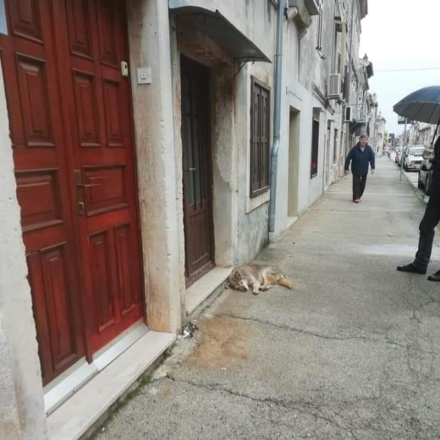 Pas Lady čeka ispred Salkove kuće