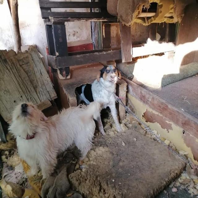 Psi iz Koprivnice prije privremenog oduzimanja
