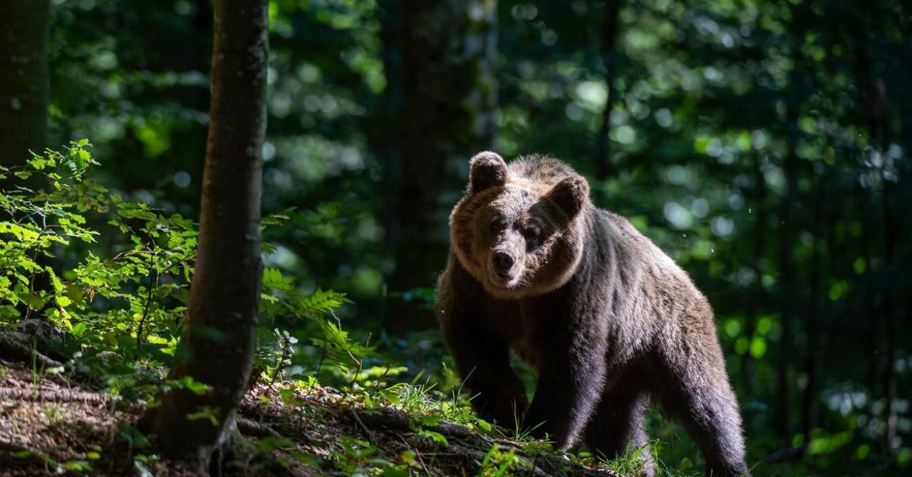 Lihtenštajnski princ suočen s teškim optužbama: 'Ubio je najvećeg medvjeda u Europskoj uniji'