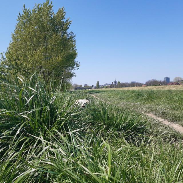 Mašenjka viri iz trave
