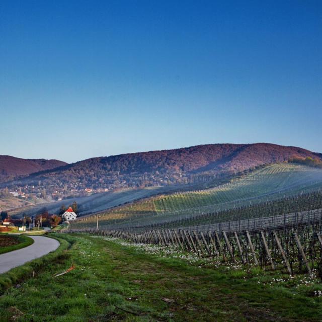 vinogradi Plešivica