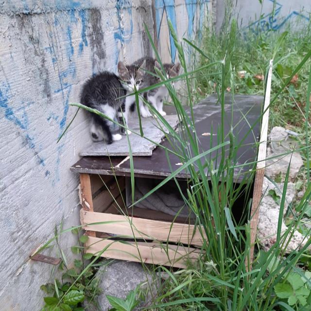 Mačići na improviziranoj kućici<br />