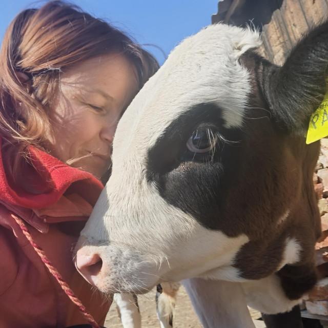 Krave su veoma umiljate. Na slici: Ivana Varkonji i Borna