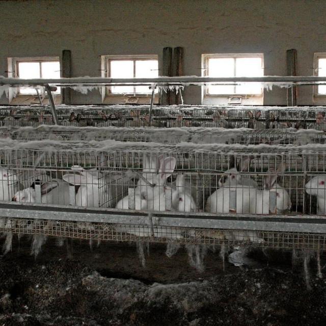 Uzgoj zečeva u kavezima
