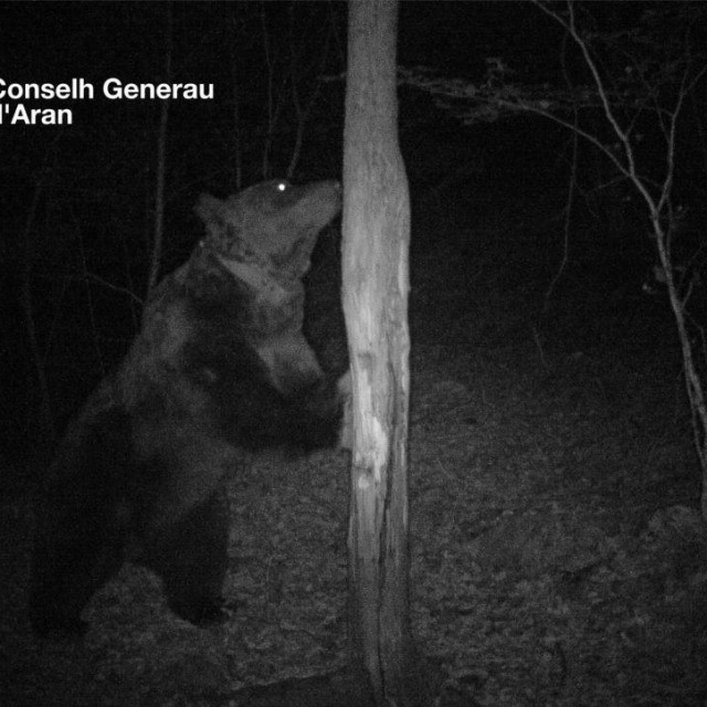 Ozloglašeni medvjed u noćnoj akciji