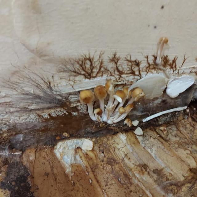 Gljive u zgradi Muzičke akademije