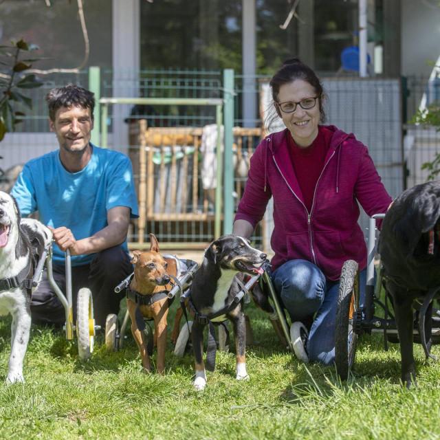 Psi u invalidskim kolicima u Čakovcu