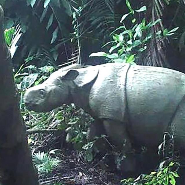 Snimka s kamere pokazuje malenog nosoroga
