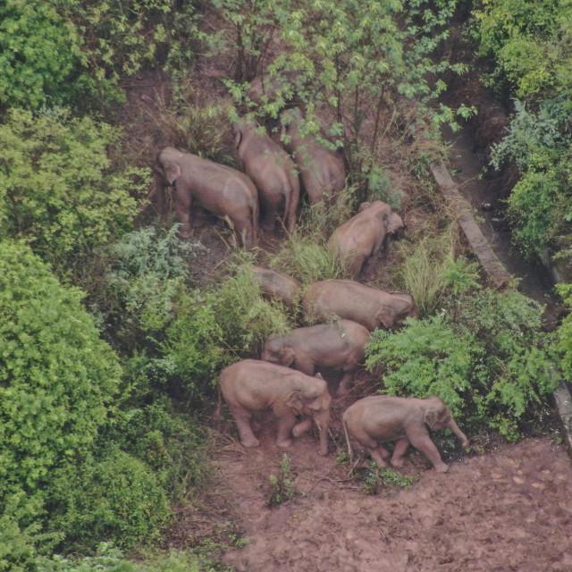 Slonovi koji putuju Kinom